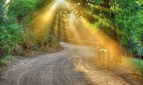 camino iluminado por rayos de sol